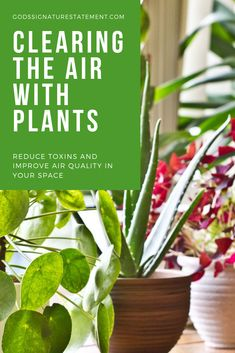 Live houseplants can help rid the air of toxins and chemicals which can help reverse adverse effects like headaches and improve the quality of your sleep. Discover some plants that you can add to your collection. Wellness Wheel, Our Environment, Houseplants, Rid, Sleep, Herbs, Space, Create, Health