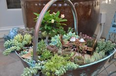 Succulent fairy garden in old-fashioned pail