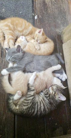 Sweet kitty cats resting on a hot summer day!