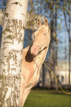 Oh, you cheeky horsey hiding behind the tree, playing coy | The Prettiest Horse In The World