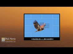 Ok, so don't actually throw away your wide angle lens. This video has been made to show that not all landscape images need to be photographed with a wide ang... Photography Tips, Nature Photography, Nikon D5500, Wide Angle Lens, Camera Settings, Birds In Flight, Shots, Magazine, Landscape