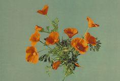 Farbe - Vintage Poppies Fotoprint - ein Designerstück von T-ARTLounge bei DaWanda