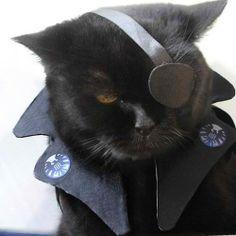Nick Furry of the Avenge-Purrs #avengers #nickfury #marvelcomics #cat #cosplay