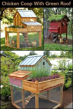 Create a green roof for your chicken coop to grow more plants or herbs in your backyard. Urban Chicken Coop, Cheap Chicken Coops, Chicken Cages, Portable Chicken Coop, Best Chicken Coop, Chicken Coop Plans, Building A Chicken Coop, Chicken Houses, Chicken Pen