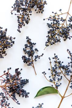 privet berries - photo by Sweet Root Village http://ruffledblog.com/pale-pink-and-icy-blue-floral-arrangement