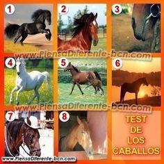 Los caballos han servido como compañeros a los humanos desde hace siglos y al igual que las personas, tienen muy variadas personalidades. E...