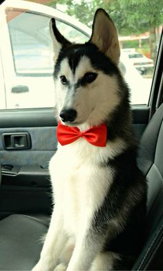 Aww cute bow tie ;) @Jasmine Ann {The Gluten Free Scallywag} Ann Salinas