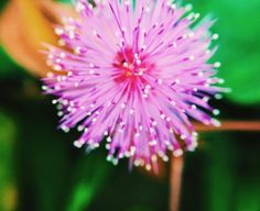 Flower Macro lens Photography by ( Shot with the Ztylus Macro Lens) Macro Lens Photography, Amazing Photography, Virtual Flowers, May, Dandelion, Plants, Garden, Dandelions, Lawn And Garden