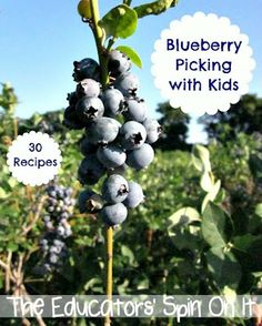 30 Ways to Eat Blueberries from Little Hands that cook with Books.  We've included our blueberry picking adventure, cleaning method, books, songs, over 30 Blueberry Recipes to make with your children!