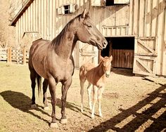 Mare and Colt animal photograph, Horse Photography, Fine Art Nature Print, 8x10 $25 silent auction baskets?