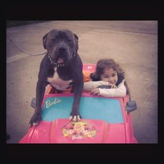 Pit bull car ride cruising love happy dog rescue