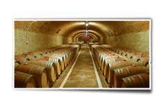 Conferinta şi expoziţia Top Day se încheie cu degustarea unor vinuri de top oferite de firma Vinarte, care îşi ia resursele de fructe din trei zone dintre cele mai vestite pentru viticultură: Dealu Zorilor, Sâmbureşti şi Vânju Mare. datorită calciului şi cretei din solul dealului Zoresti Vinarte produce cel mai bun vin Merlot din România.