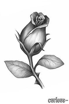 22 Great Rose Bud Tattoo Images Flowers Rose Vine Tattoos Drawings