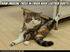 funny cat pictures -
