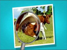 Film: La classification des animaux - Sid le petit scientifique