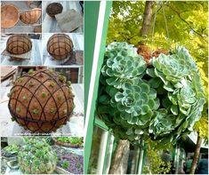 succulent hanging baskets spheresl. another take on using drought tolerant succulents in container gardens. hanging succulent sphere DIY.   http://www.amazinginteriordesign.com/make-succulent-sphere-garden/