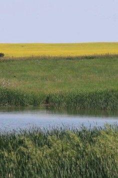 Audubon National Wildlife Refuge, encompassing 14,735 acres of native prairie.