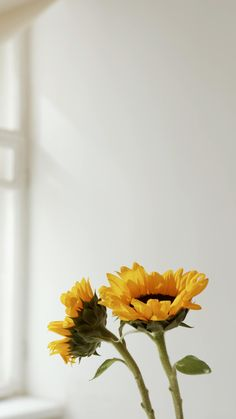 Sunflower Wallpaper, Flower Background Wallpaper, Flower Backgrounds, Wallpaper Backgrounds, Aesthetic Photography Nature, Nature Aesthetic, Flower Aesthetic, Nature Photography, Aesthetic Backgrounds