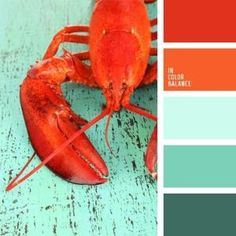 The color palette number 59  turquoise, turquoise and coral, turquoise and red, contrasting colors, coral, orange, palette for a designer, color of boiled lobster, by Audrey Motsinger