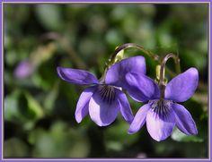 Caroline is no shrinking violet.