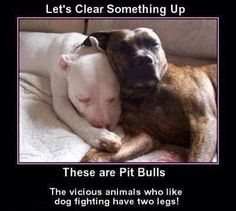 Dog Fighting Petitions -