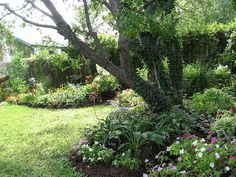 Hosta, impatiens and columbine in shade garden under live oak tree by pawightm (Patricia), via Flickr