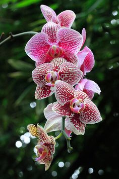 These Orchids will make an elegant, and decorative statement at my, '' Rooftop Party''.