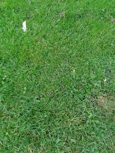 Natuurlijke structuur  Grasveld