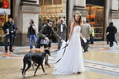 Their presence in the Galleria Vittorio Emanuele, the living room of Milan, has not gone unnoticed. Her beautiful, elegant in her white wedding dress, and also the two beautiful greyhounds that led on a leash. No marriage in sight, though: it is a model who posed for a photo shoot in the heart of the Italian fashion capital.
