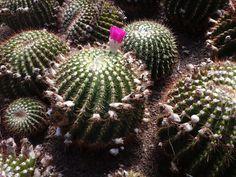Unique Cactus at Pine View Nursery