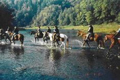 Cook Forest Scenic Trail ride & campground in Clarion, PA.