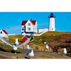 Seagulls at Nubble Lighthouse Cape Neddick York Maine USA Canvas Art - Panoramic Images (36 x 24)