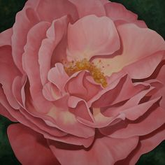 open pink rose - Google Search