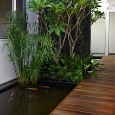 Is it obvious that I'm collecting backyard inspiration? Hence my obsession with Sydney landscap. Diy Garden Bed, Diy Garden Decor, Tropical Landscaping, Tropical Garden, Outdoor Plants, Outdoor Spaces, Outdoor Living, Diy Patio, Backyard Patio