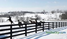 Deep freeze at GarnetBrooke? Shot taken during February 2015 at Stonestreet--credit for photo says this is in Fayette County but I know this farm is in Woodford--I drive by it everyday on my way to work.