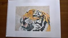 """""""back off"""" tiger in colour pencils"""
