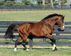 Union Rags - one of the most gorgeous racehorses I've ever seen