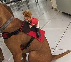 Halloween Puppy Costume - Horse & Jockey: 13 Steps (with Pictures) Puppy Costume, Diy Dog Costumes, Horse Costumes, Pet Halloween Costumes, Dexter Costume, Costume Ideas, Animal Costumes, Halloween Makeup, Jockey Costume