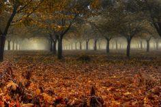 Meet your 'Trees' photo contest winner