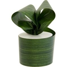 Aspidistra or cast iron leaves a great price for large roll more