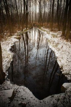 Last Reflection Photo by Rajesh Pamnani — National Geographic Your Shot
