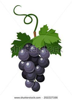 Bunch of black grapes. Vector illustration.