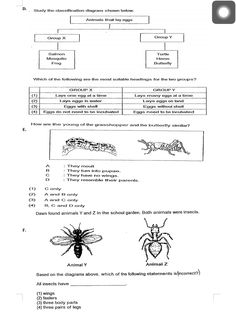 Theme 4, Seatwork #2, Life Cycle, page 2