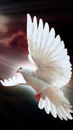 White Dove On Roof Birds Wallpaper Beast Wallpaper, Bird Wallpaper, Mobile Wallpaper, Iphone Wallpaper, Santas Tattoo, Beautiful Birds, Animals Beautiful, Find The Difference Pictures, Ascension Of Jesus