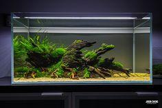 Very cool scape b Biotope Aquarium, Aquarium Fish Tank, Planted Aquarium, Aquascaping, Aquarium Landscape, Nature Aquarium, Nano Cube, Fish Tank Design, Pisces