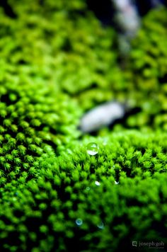 water drop on moss | nature + macro photography