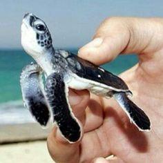 Cute little sea turtle