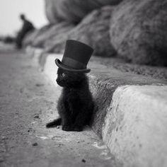 Night Circus kitty!