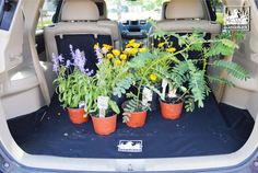 A Canvasback cargo liner makes a great gift for a gardener! Shop canvasback.com Shout out to Superior Outdoor Expressions for the beautiful flowers!  #canvasback #cargoliner #cargoliners #gardening #garden #gardener #plants #flowers #mud #dirt #cleancar #vehicle #handmade #handsewn #flowerpot #protectyourrear #summer #summerdays #shop #local #toyota #highlander