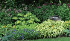 Backyard gardening-shade-gardens